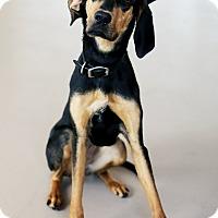 Adopt A Pet :: Chloe *Petsmart GB* - Appleton, WI