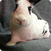 Adopt A Pet :: Gabriel - Newport, DE