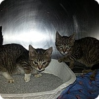Adopt A Pet :: Starsky & Hutch - Silver Lake, WI