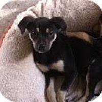 Adopt A Pet :: Sage - Modesto, CA