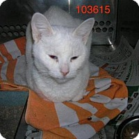 Adopt A Pet :: Bianca - Hamilton, ON