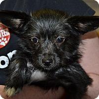 Adopt A Pet :: Stella - Meridian, ID