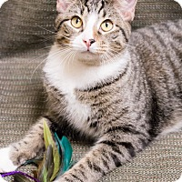 Adopt A Pet :: Will - Chicago, IL