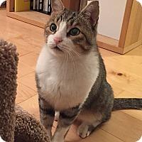 Adopt A Pet :: Schrodinger - Horsham, PA