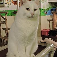 Adopt A Pet :: Merlin - MARENGO, IL