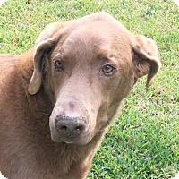 Adopt A Pet :: Tanger - Sarasota, FL