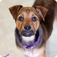 Adopt A Pet :: Annie - Dalton, GA