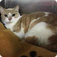 Adopt A Pet :: Stumpy - Kansas City, MO
