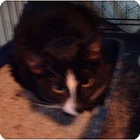 Adopt A Pet :: Baby Girl - Hampton, CT