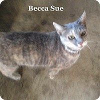Adopt A Pet :: Becca Sue - Bentonville, AR