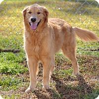 Adopt A Pet :: Rose Bud - New Canaan, CT