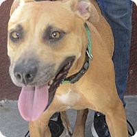Adopt A Pet :: Katina - St. Thomas, VI