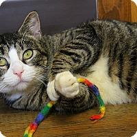 Adopt A Pet :: Paulette - Portland, OR