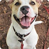 Adopt A Pet :: Buster Brown - Titusville, FL