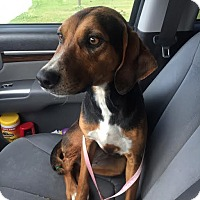 Adopt A Pet :: Trinity - Blountstown, FL