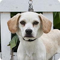 Adopt A Pet :: QT Fresh - Los Angeles, CA