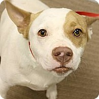 Adopt A Pet :: Dash - Scottsdale, AZ