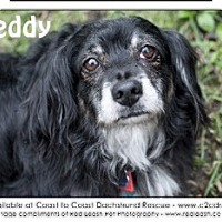 Adopt A Pet :: Teddy - MD - Jacobus, PA