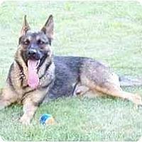 Adopt A Pet :: Tiko - Hamilton, MT