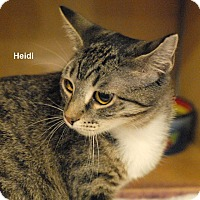 Adopt A Pet :: Heidi - McDonough, GA