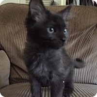 Adopt A Pet :: Apollo - Riverside, RI