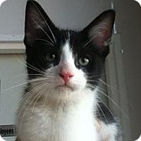 Adopt A Pet :: Moe - Hamilton, ON