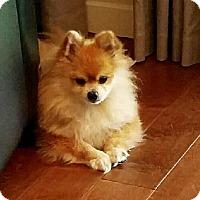 Adopt A Pet :: Prince - Minnetonka, MN