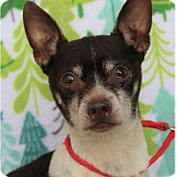 Adopt A Pet :: RUDOLPH - Red Bluff, CA