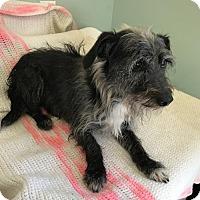 Adopt A Pet :: Bodie - Costa Mesa, CA