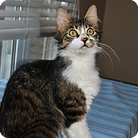 Adopt A Pet :: Meena - Mississauga, Ontario, ON