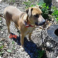 Adopt A Pet :: JOE - Princeton, KY