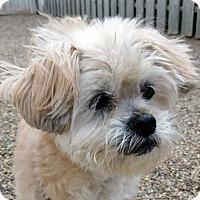 Adopt A Pet :: Maizey - Bloomington, IL