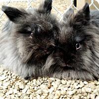 Adopt A Pet :: Aughra & Kira - Livermore, CA