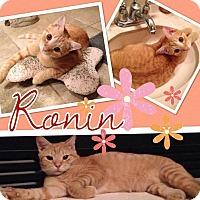 Adopt A Pet :: Ronin - Keller, TX