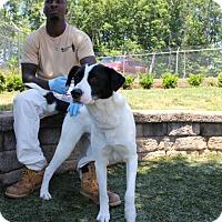 Adopt A Pet :: Skip - Greensboro, NC