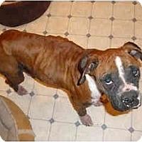 Adopt A Pet :: Pretzel - Albany, GA