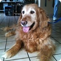 Adopt A Pet :: Bobby Luke - Foster, RI