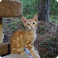 Adopt A Pet :: Enzo - Monroe, GA