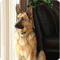Adopt A Pet :: Tamlyn - Hamilton, MT