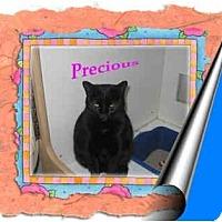 Adopt A Pet :: Precious - Jacksonville, FL