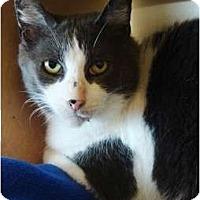 Adopt A Pet :: Buddy - Albany, NY