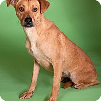 Adopt A Pet :: Emily*ADOPTED!* - Chicago, IL