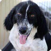 Adopt A Pet :: Ralph - Groton, MA