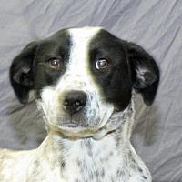 Adopt A Pet :: Eleanor - Modesto, CA