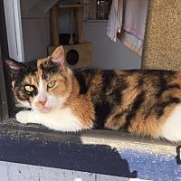 Adopt A Pet :: Yvette - Porter, TX