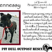 Adopt A Pet :: Hennessy - Lafayette, OR