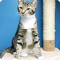Adopt A Pet :: Rajah - Virginia Beach, VA