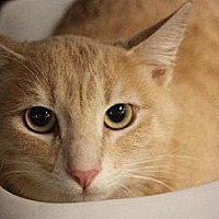 Adopt A Pet :: Miguel / Mikey - Chino, CA