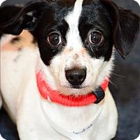 Adopt A Pet :: Houdina - Columbus, OH