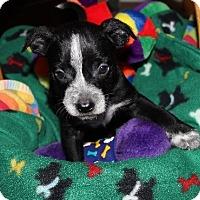 Adopt A Pet :: Kael - Alpharetta, GA
